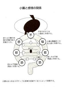 小腸と感情の関係
